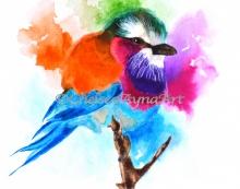 birdcopyright