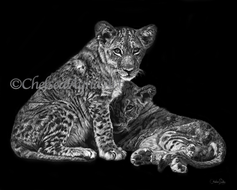 Lion Cubs Scratchboard Art